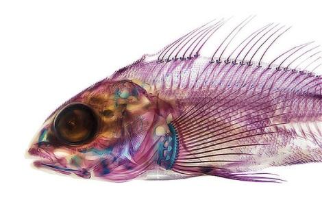 Adam-Summers-Fish-2