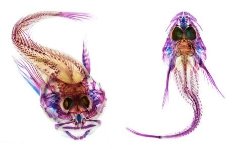 Adam-Summers-Fish-7