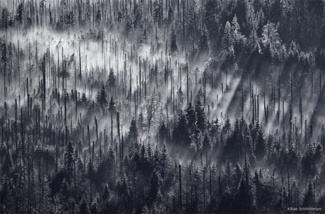 forests-2
