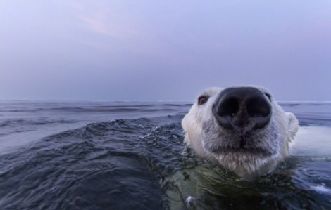 Polar-Bear-Photography10-640x408