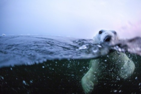 Polar-Bear-Photography11-640x426