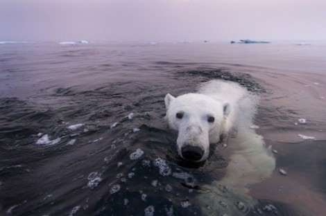 Polar-Bear-Photography12-640x426