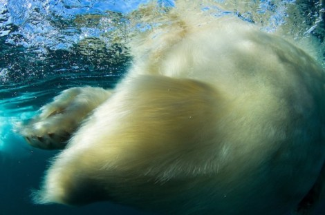 Polar-Bear-Photography3-640x426
