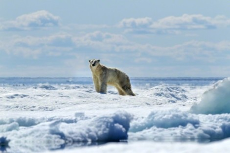 Polar-Bear-Photography7-640x426-1