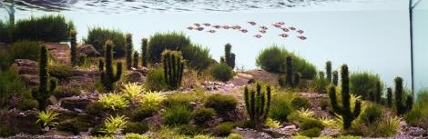 Aqua-Cacti