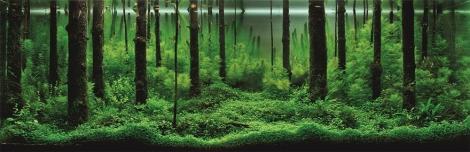 Aqua-Forest