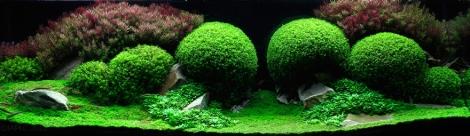 Aqua-Green