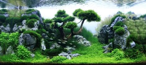 Aqua-Tree