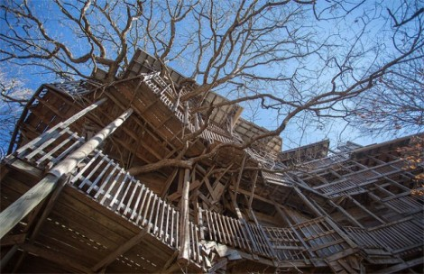 Inside-the-Worlds-Biggest-Tree-House7-640x415