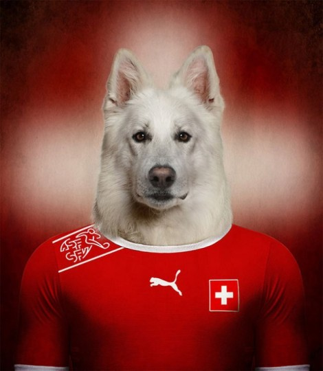 Dogs-of-World-Cup-Brazil-201415-640x736