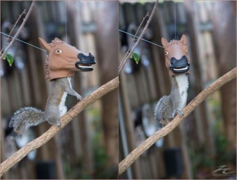 horse-head-squirrel-feeder-930x709-480x365