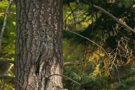 Animals-in-Hiding1-640x426