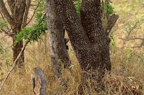 Animals-in-Hiding12-640x426