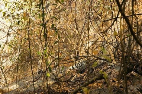 Animals-in-Hiding5-640x426
