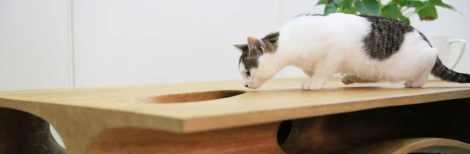 design-cat-table