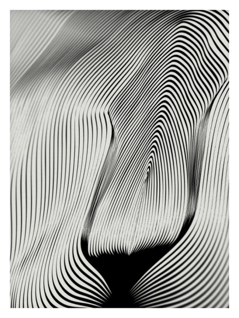 Animals-Drawn-with-Moire-Patterns9